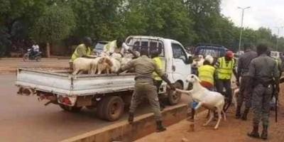 Burkina  Faso : Tabaski 2021, le maire de Ouagadougou interdit la vente anarchique de moutons et de volailles