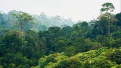 Côte d'Ivoire : Guiglo, 02 clandestins Burkinabés installés dans une forêt classée co...
