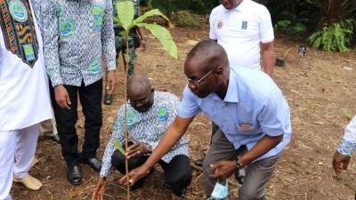 Côte d'Ivoire : Développement de la Forêt, un planting symbolique pour marquer le 55è anniversaire de la SODEFOR