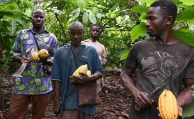 Côte d'Ivoire: Ouverture de la campagne commerciale 2021-2022 du cacao, le prix bord champ du kilogramme de la fève fixé demain par le Conseil café-cacao
