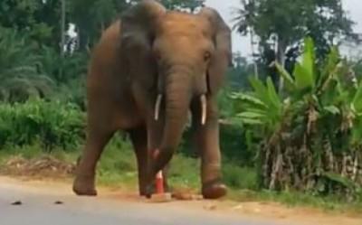Côte d'Ivoire : Drame à Didiévi, un élève tué par un éléphant