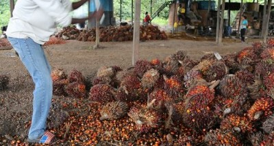 Côte d'Ivoire : Le Gouvernement dissout le FER-PALMIER et annonce la nomination d'un liquidateur