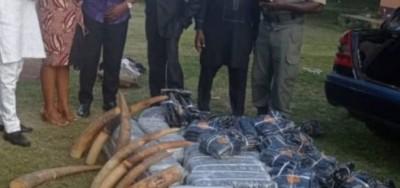 Cameroun : Gros coup de filet dans le milieu du braconnage