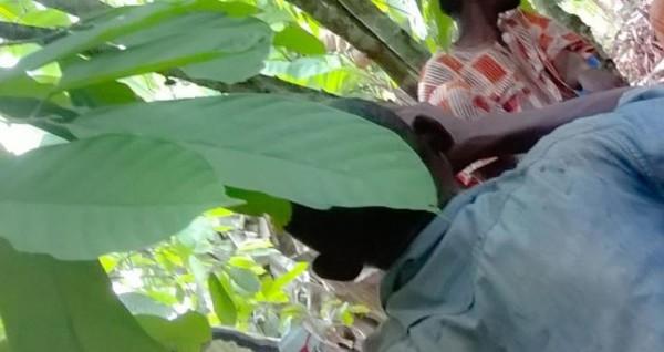 Côte d'Ivoire: Pour une somme de 61 000 frs CFA, à N'Gorankro (Oumé), il tue son père à coups de pilon