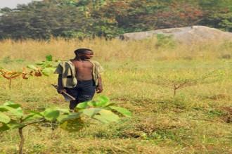Désaffection pour la culture coton, lÂ'économie Béninoise en difficulté !