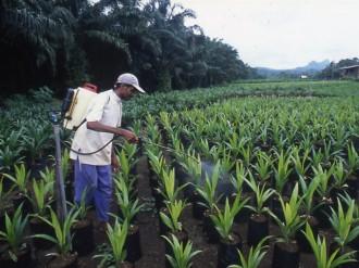 COTE D'IVOIRE : Huile de Palme: net repli du résultat de PALMCI au premier trimestre