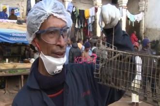Madagascar : La peste propagée par les rats fait une quarantaine de morts