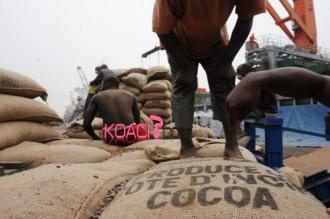Côte dÂ'Ivoire : Hausse de 30% de la production de cacao