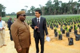 TRIBUNE GABON: Ngounié à l'heure du palmier à huile