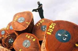 GABON: LÂ'industrialisation de la filière bois en marche
