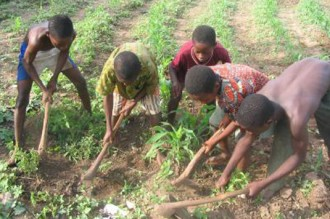 2 millions de jeunes camerounais, victimes du travail des enfants.