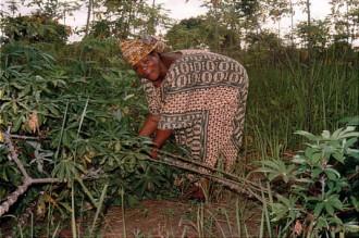 LÂ'Ouest, les cadres réticents au retour des allogènes dans les plantations