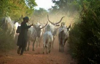 GHANA :  Encore 7 jours et les Foulani disparaîtront de la région Ashanti !