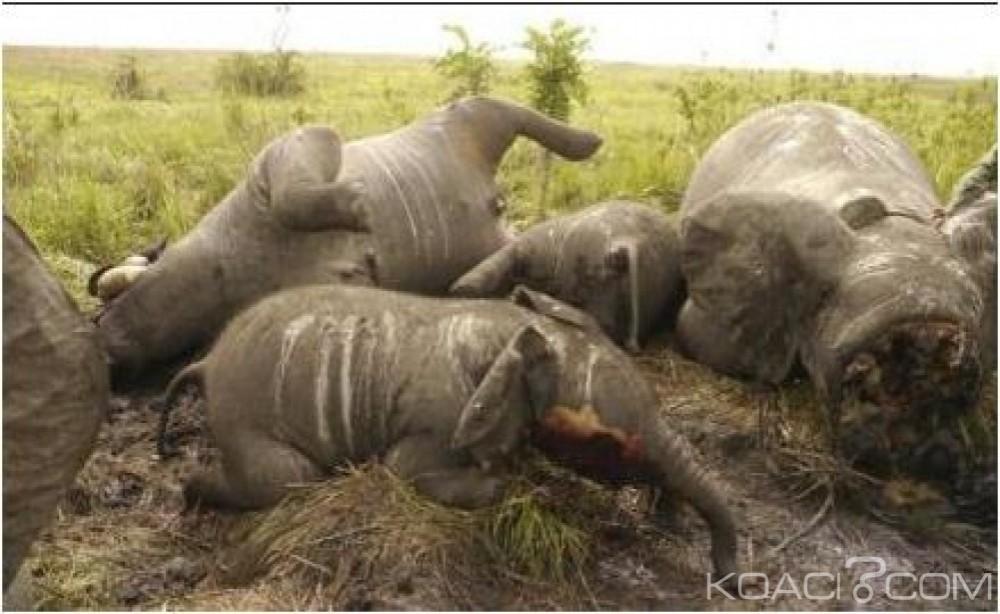 RDC : Quatre gardes forestiers tués par des braconniers lors des échanges de tirs