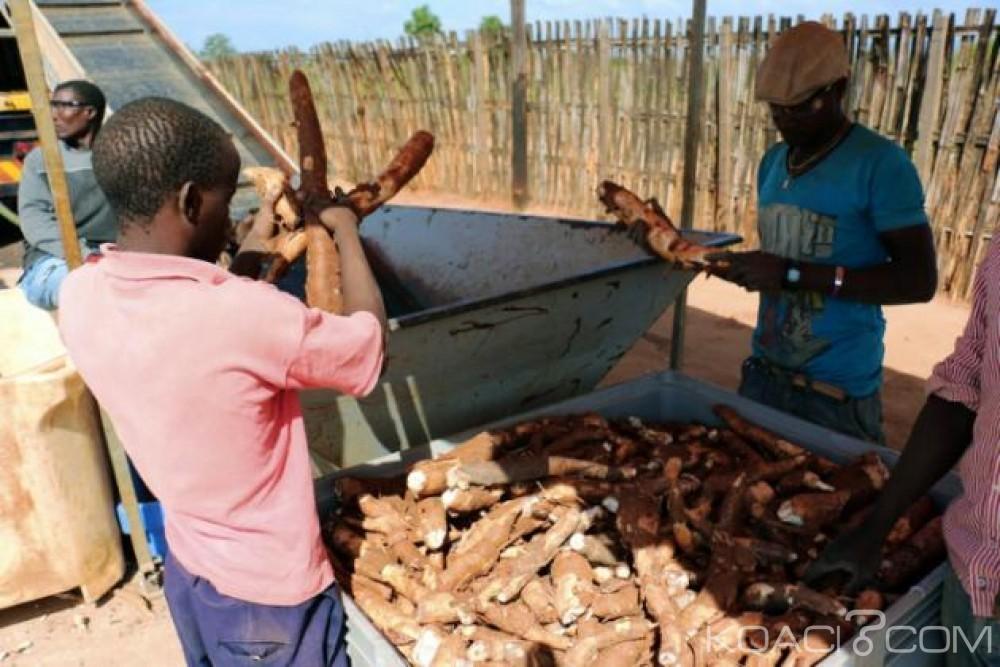 Mozambique: Maputo relève le défi de la bière au manioc