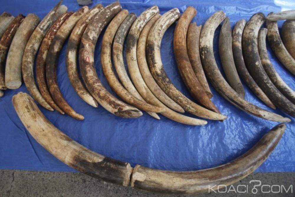 Burkina Faso: Près de 70 kg d'ivoire en partance pour la Côte d'ivoire saisies