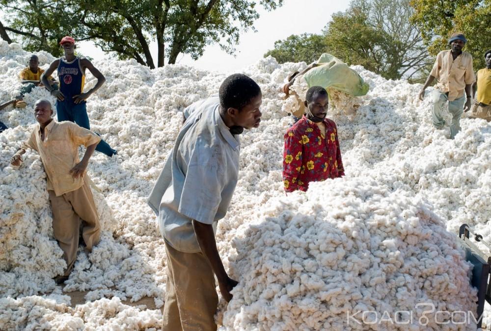 Burkina Faso : La culture du coton génétiquement modifié sera abandonnée d'ici 2017