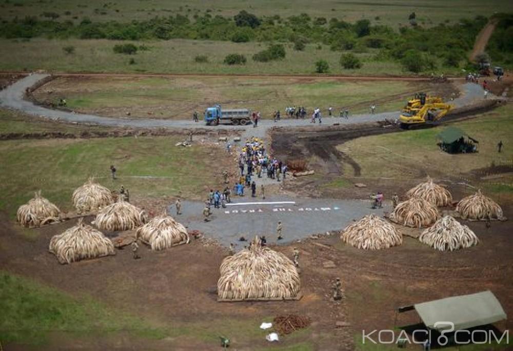 Kenya: Destruction d'un important stock d'ivoire