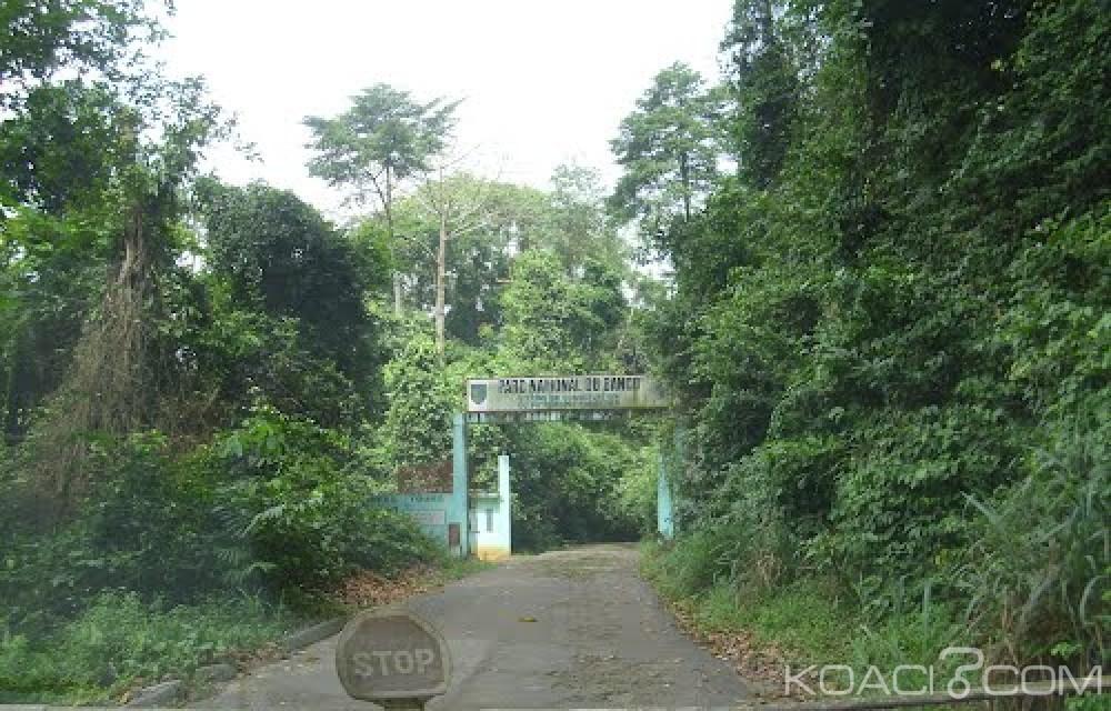 Côte d'Ivoire : Abobo, six individus en possession d'une tête d'un humain surpris dans la forêt du Banco