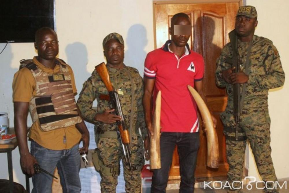 Côte d'Ivoire: Des trafiquants d'ivoires arrêtés sur l'axe Bonoua-Aboisso