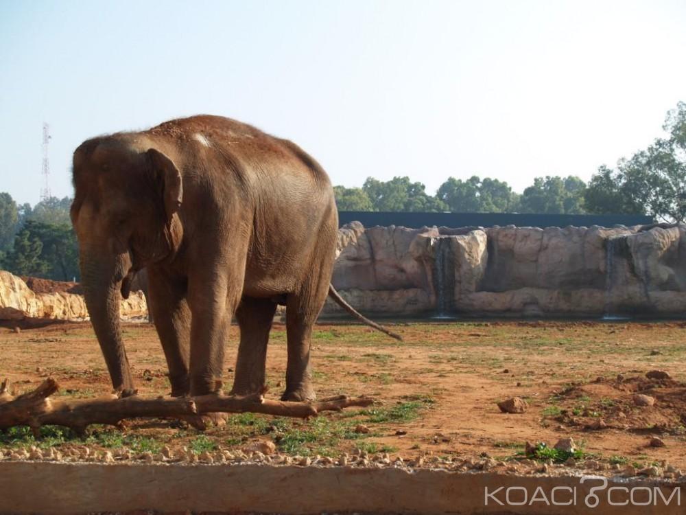 Maroc:  Une fillette de 7 ans blessée mortellement par un éléphant au zoo de Rabat