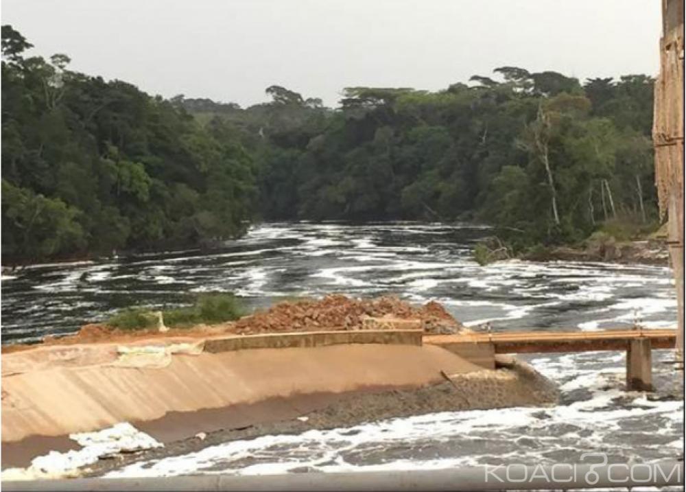 Cameroun: Greenpeace accuse l'Unesco  d'avoir échoué à protéger la réserve du Dja des nombreuses menaces