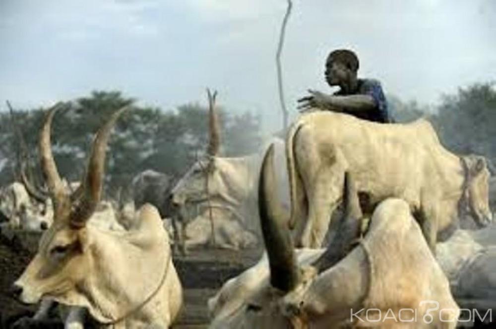 Nigeria: 36 personnes abattues  par des voleurs de bétails présumés dans le nord