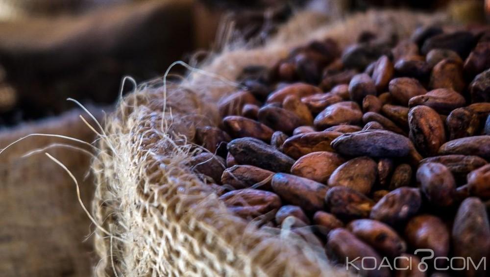 Côte d'Ivoire: Après plusieurs semaines de mévente, le Gouvernement satisfait de l'écoulement du cacao et menace les acheteurs véreux
