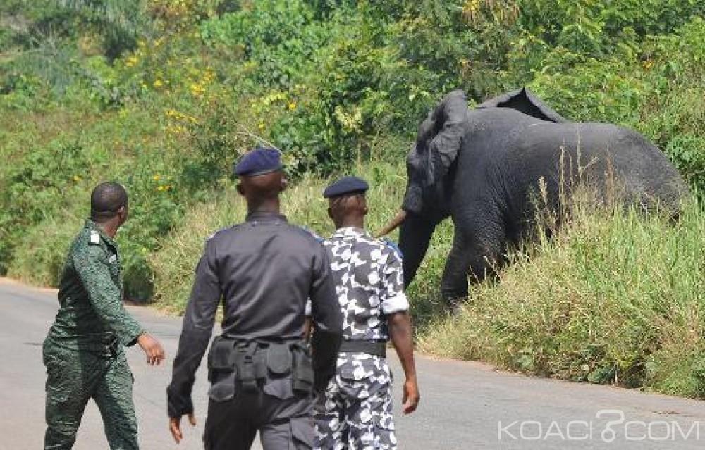 Côte d'Ivoire: Atonie de l'Etat entre la vie des populations rurales et la préservation des espèces animales, les morts s'enchaînent