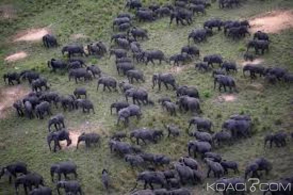 Côte d'Ivoire: l'UNESCO retire le parc national de la Comoé des sites en danger, à la satisfaction de la ministre Anne Oulotto