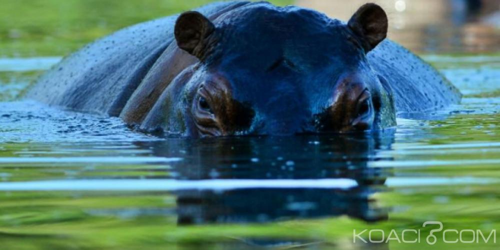Niger: Une dizaine de personnes emprisonnées pour avoir abattu un hippopotame