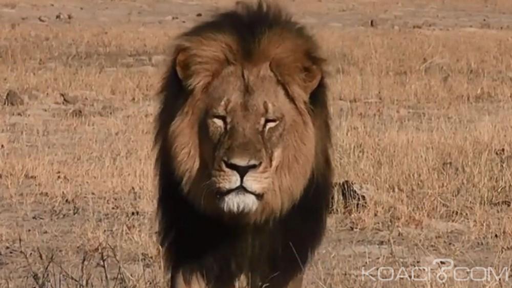 Zimbabwe: L'un des petits du célèbre lion Cecil abattu dans le parc Hwange