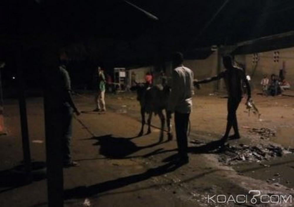 Côte d'Ivoire: A la veille de la tabaski, des bœufs en furie sèment la panique sur l'autoroute et dans certains quartiers