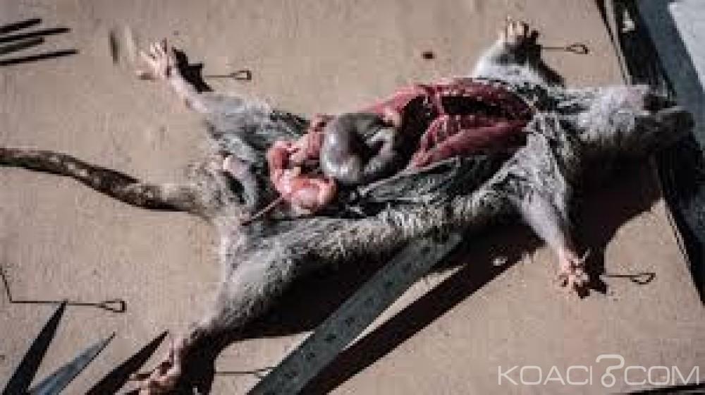 Madagascar:  Panique suite au retour de la peste, cinq morts en 15 jours