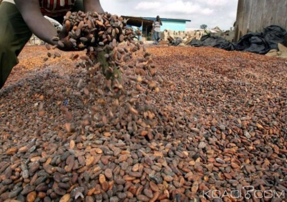 Côte d'Ivoire: Méagui-Issia, en plus de la grève annoncée, des planteurs mécontents du prix d'achat, menacent de brûler leur production de cacao