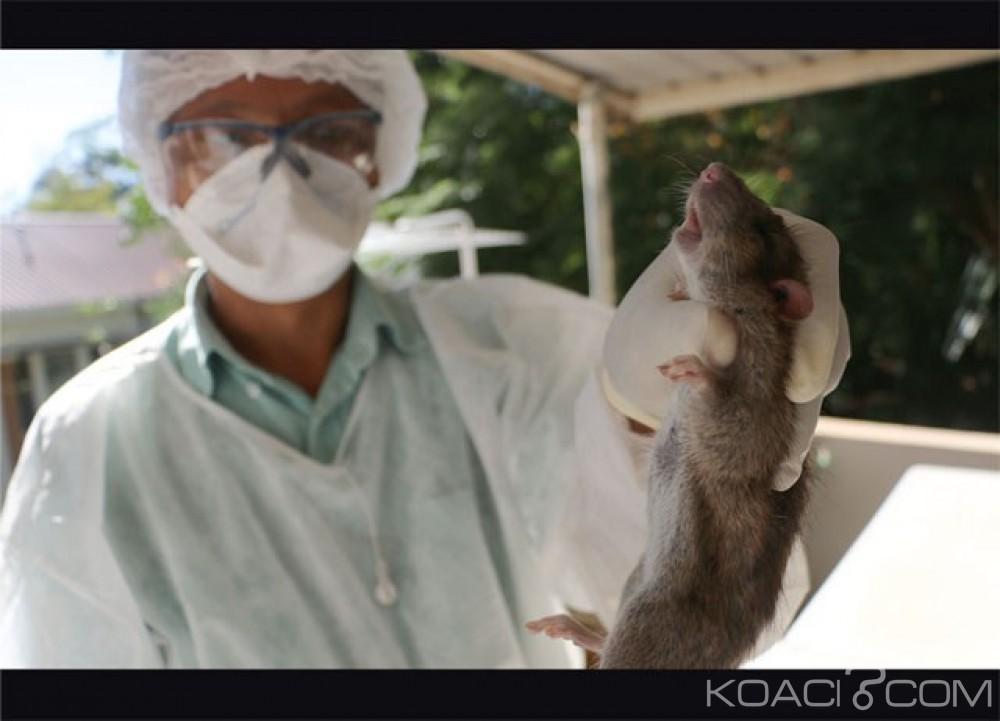 Madagascar: La peste continue de se propager, le bilan est à 80 morts