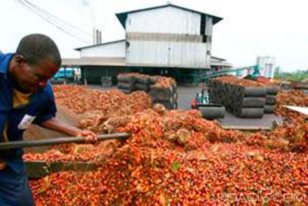 Côte d'Ivoire: Mise sur pied le Conseil hévéa-palmier à huile, les membres connus plus tard