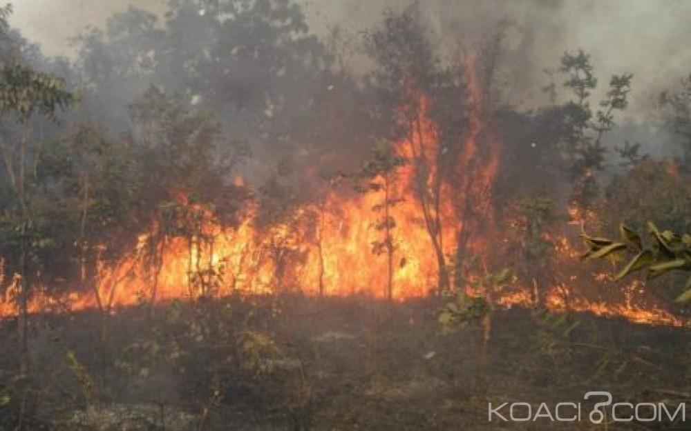 Guinée-Bissau: 11 passagers meurent calcinés dans un feu de brousse