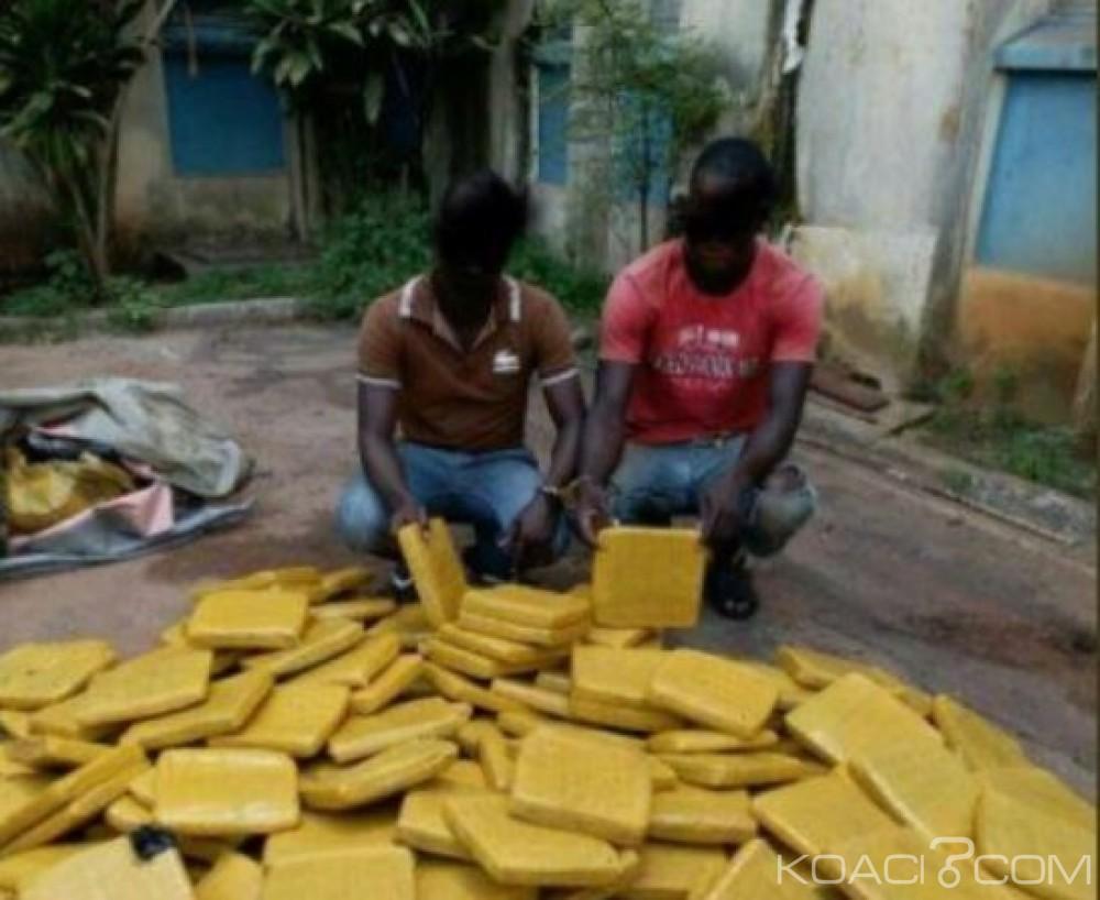 Côte d'Ivoire: 219 Kilogrammes de cannabis  saisis dans un village , deux individus interpellés