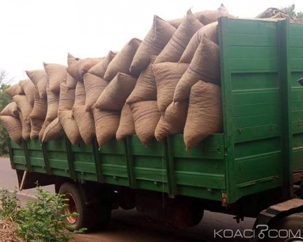 Côte d'Ivoire: Odienné, une vingtaine de tonnes de noix de cajou transportées vers le Mali saisies