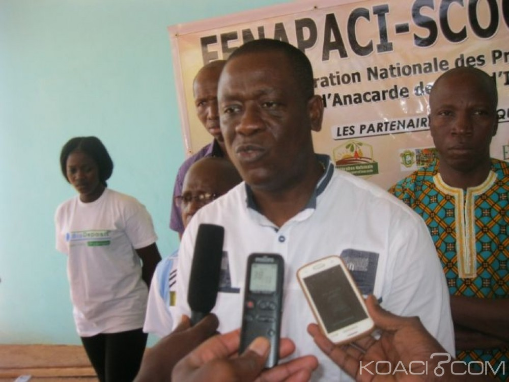Côte d'Ivoire: Mévente de la noix de cajou, les efforts de la Fenacaci pour sauver la campagne seraient-ils vains?