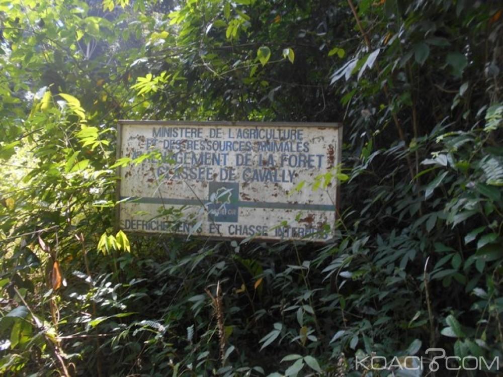 Côte d'Ivoire: Des occupants d'une forêt classée déguerpis à l'ouest