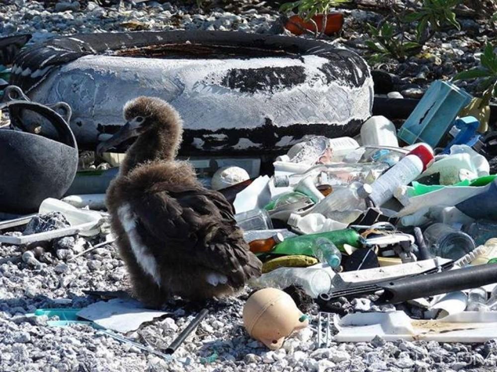 Côte d'Ivoire: 1400 espèces marines menacées par la pollution plastique