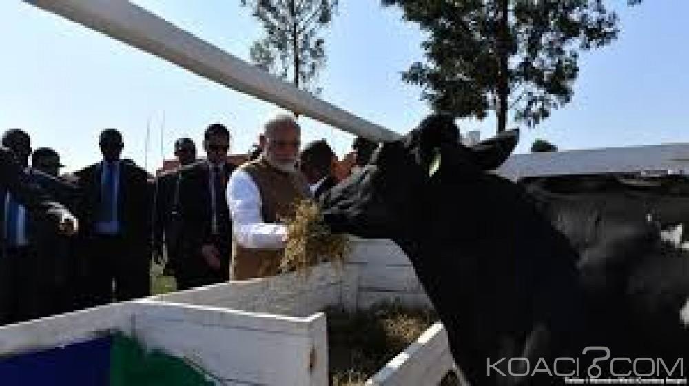 Rwanda:  Le premier ministre indien fait don de 200 vaches aux fermiers pauvres
