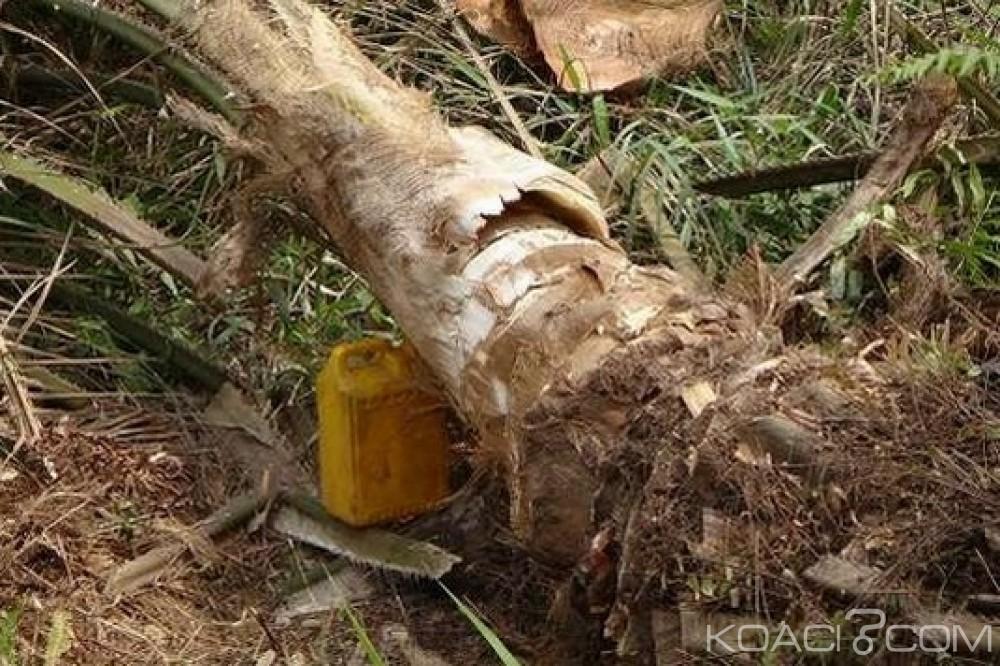 Ghana: Le vin de palme remis en cause