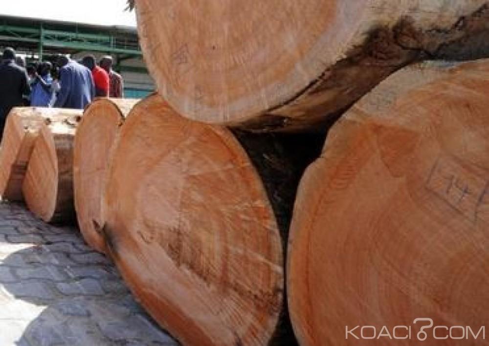 Côte d'Ivoire: Scandale aux eaux et forêts, des hauts dirigeants impliqués dans le trafic du bois et de l'orpaillage clandestin relevés de leurs fonctions