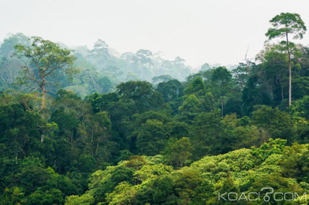 Côte d'Ivoire: Taabo, les forces spéciales expulsent des populations de la forêt classée de Doka