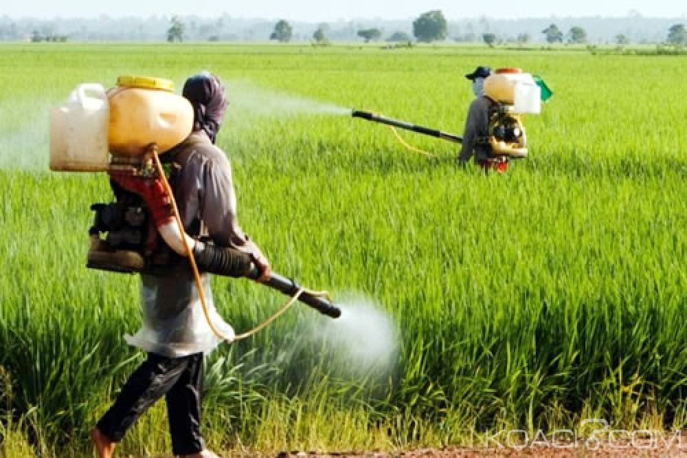 Côte d'Ivoire :  20% des pesticides frauduleux sont utilisés dans l'agriculture ivoirienne et 90% rentrent dans le pays par la frontière terrestre de l'Est