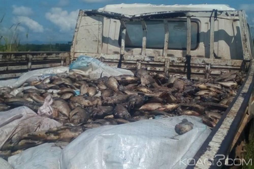 Ghana : Destruction de 18 tonnes de tilapia malsains et surveillance contre la contrebande
