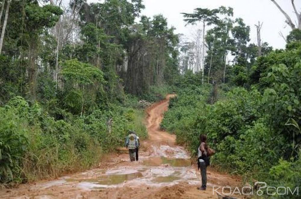 Côte d'Ivoire : Des occupants illégaux des forêts classées vont être déguerpis à l'ouest